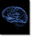 Neuroscience Programme